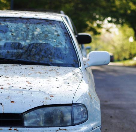اهمیت شست شوی خودرو در تابستان